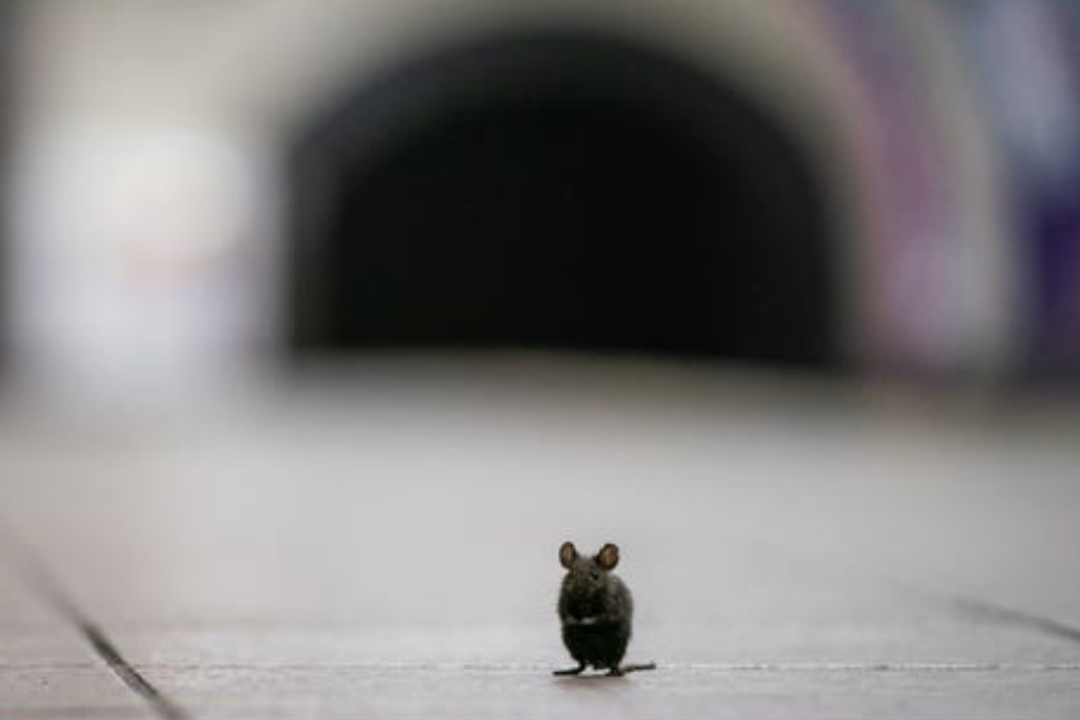 Online traffic for advice with rodent problems jumps 37%