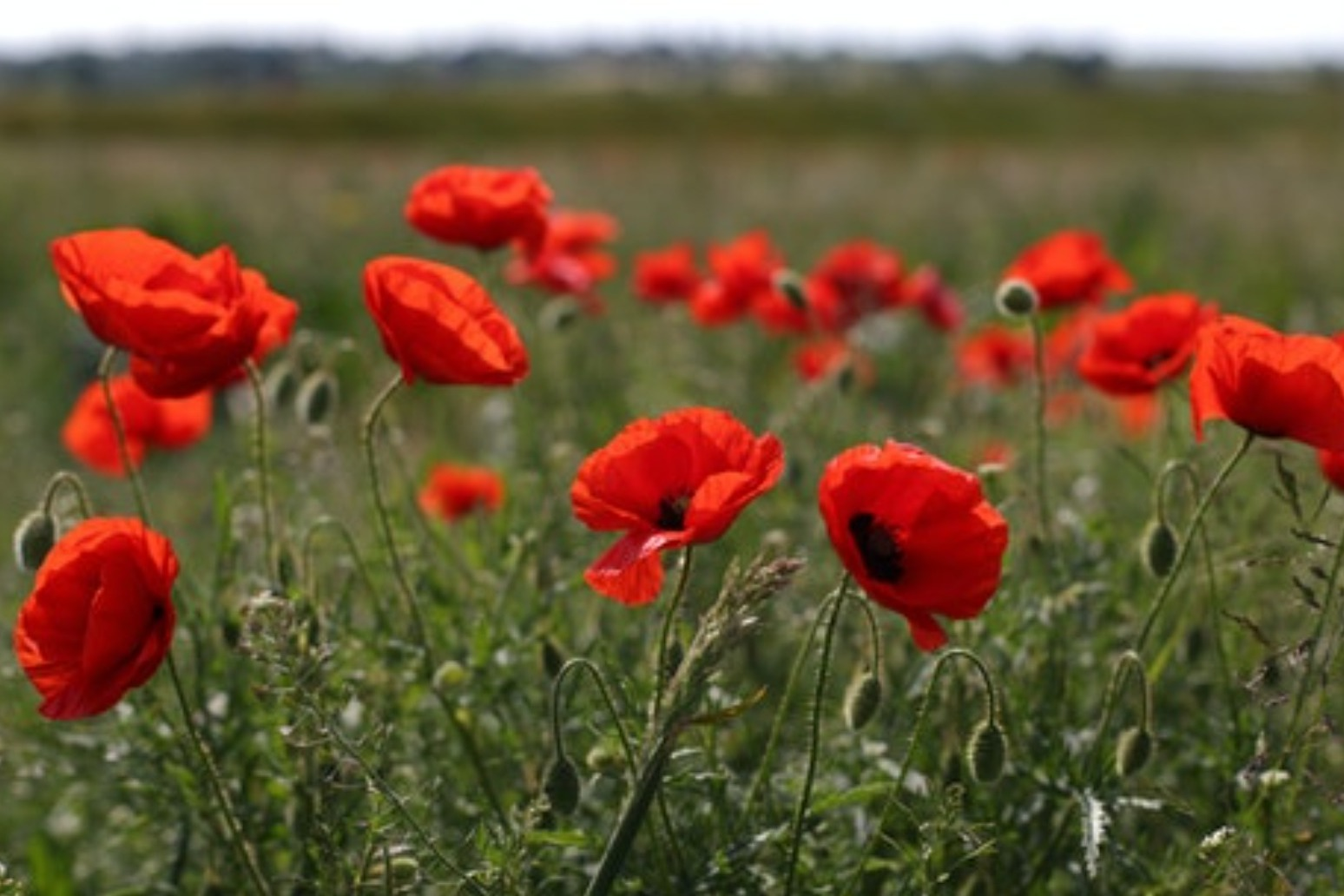 Nation to pay respects to war dead on Armistice Day