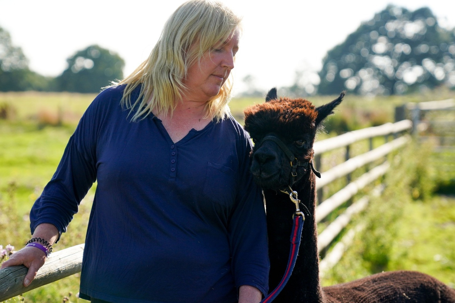 Owner of condemned alpaca Geronimo vows to 'fight on'