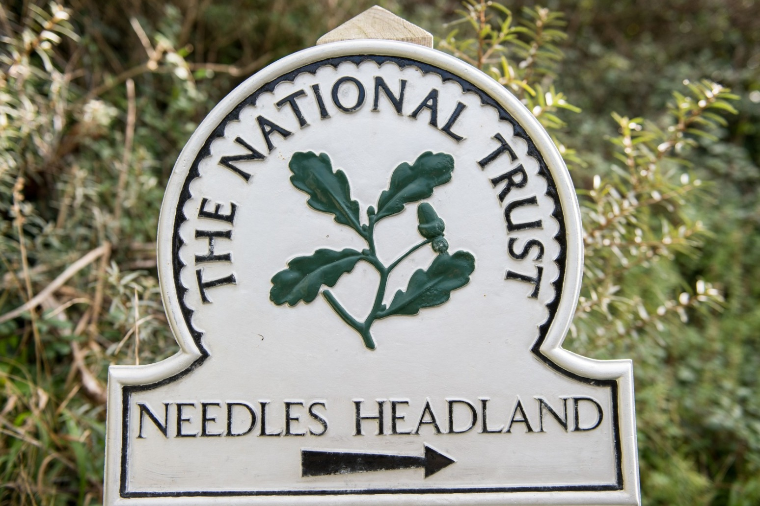 National Trust aiming to attract young people as it celebrates 125 years