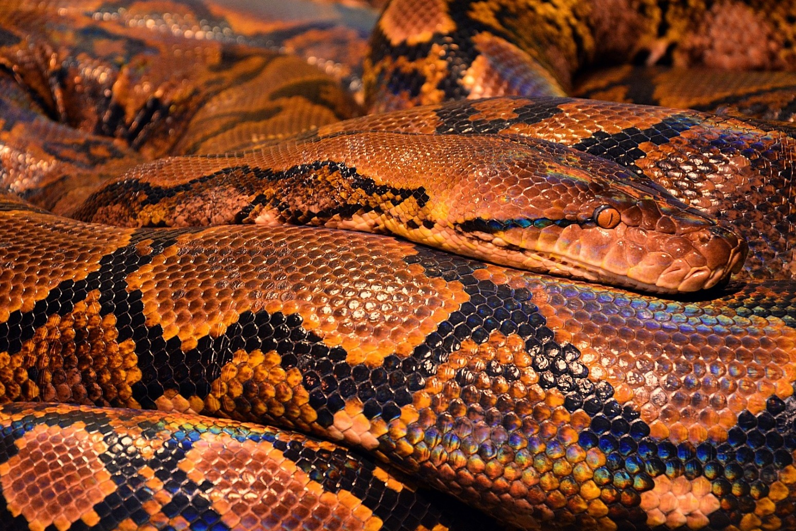 Woman illegally imported python-skin products