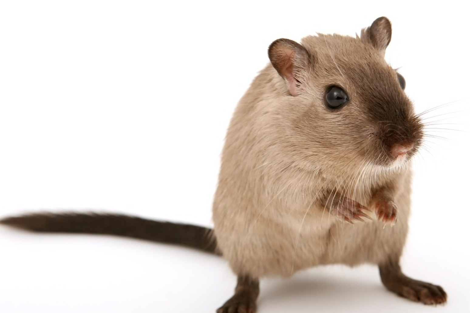 WOMAN LIVING IN VAN GIVES UP HER 320 PET RATS