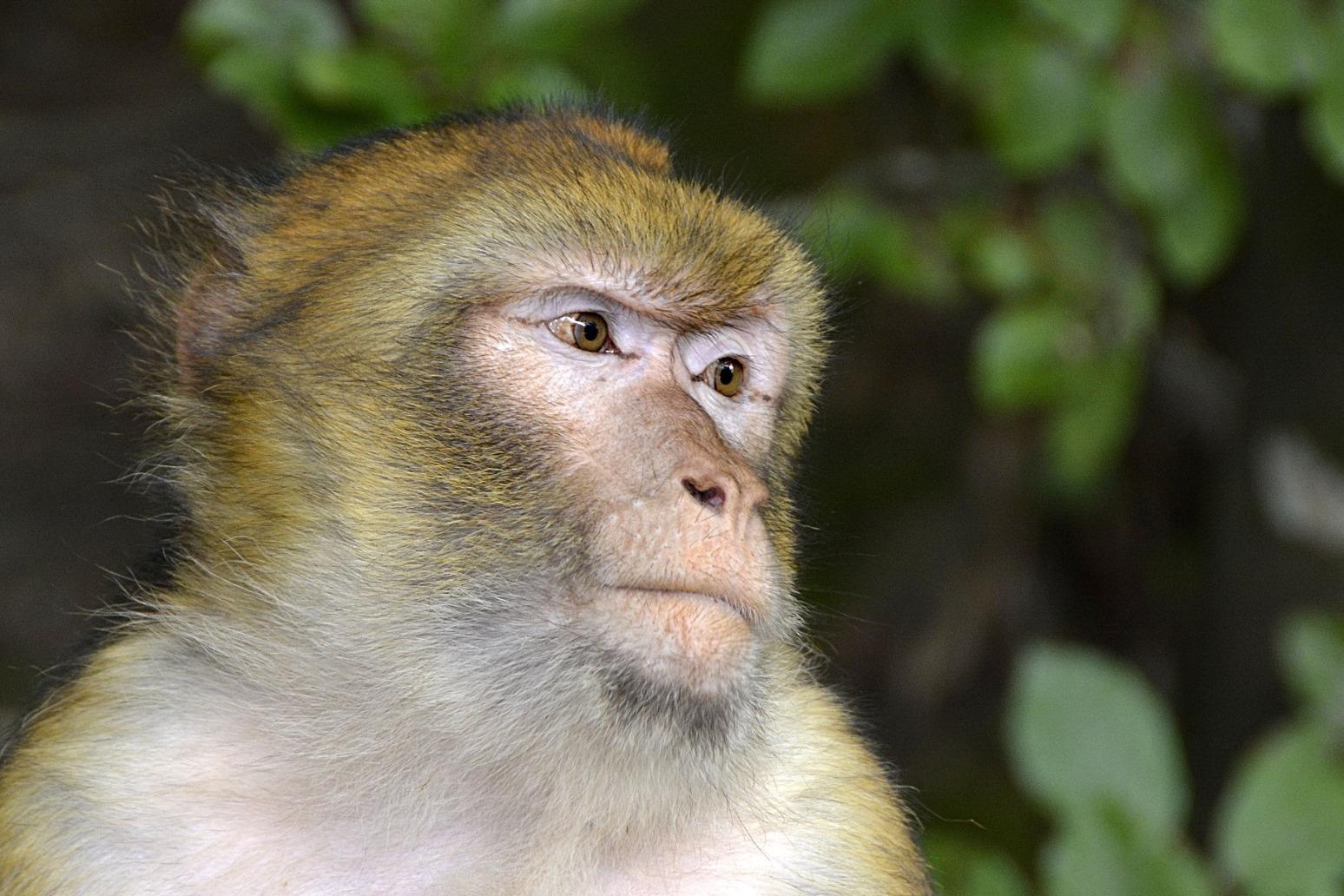 13 monkeys killed in fire a Woburn Safari Park
