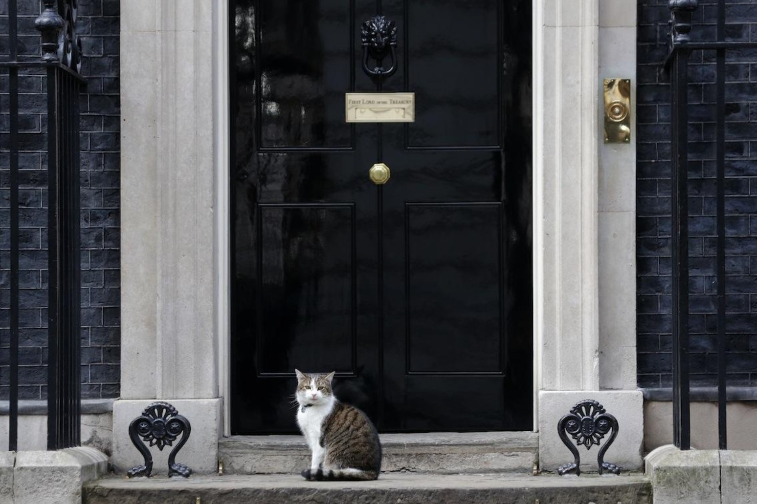 Chief mouser Larry the cat celebrates 10 years in Downing Street thumbnail
