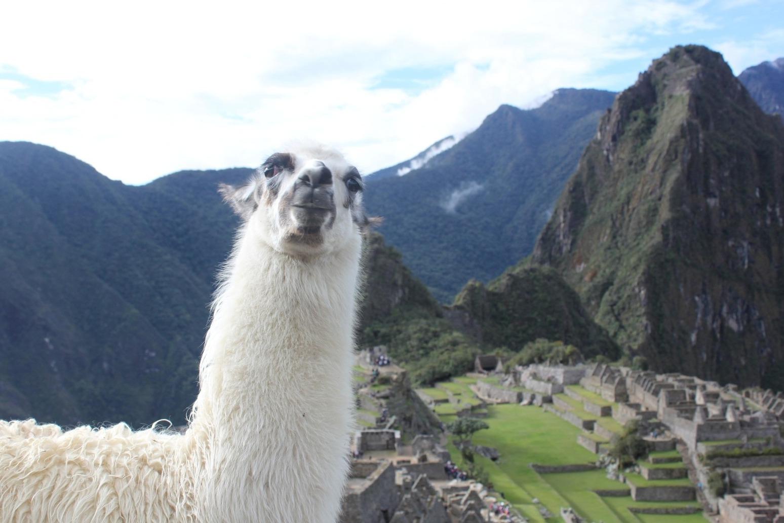 Engineered llama antibodies neutralise coronavirus, study suggests