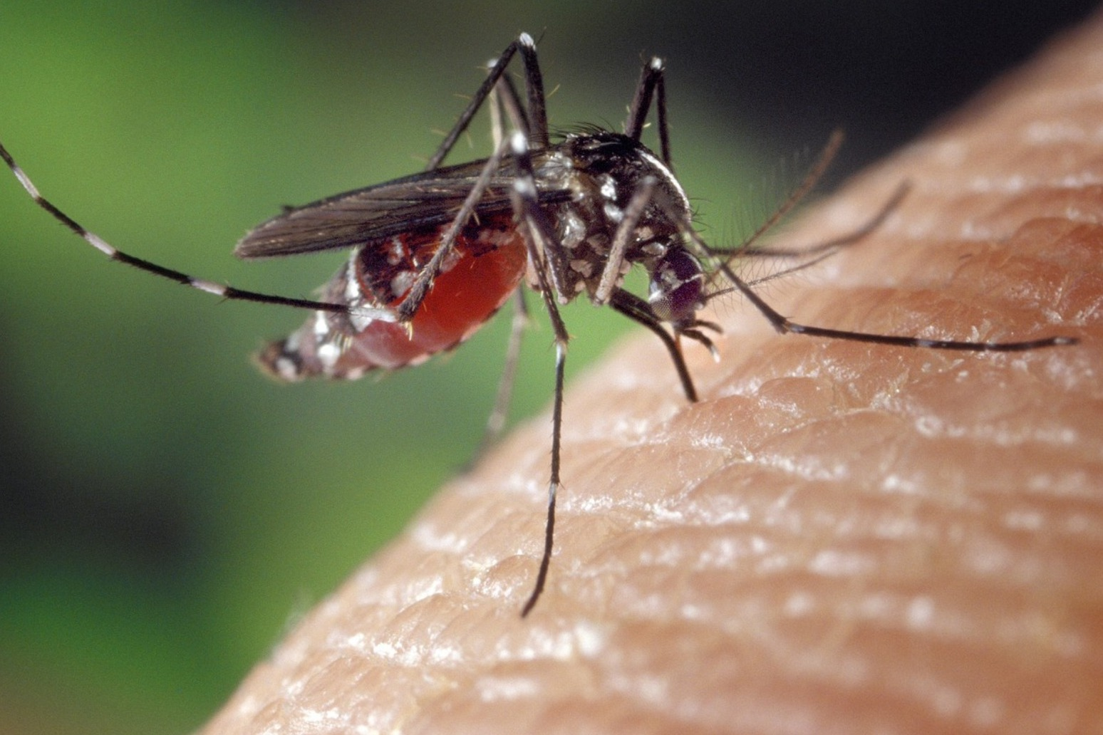 Malaria parasites becoming resistant to drugs