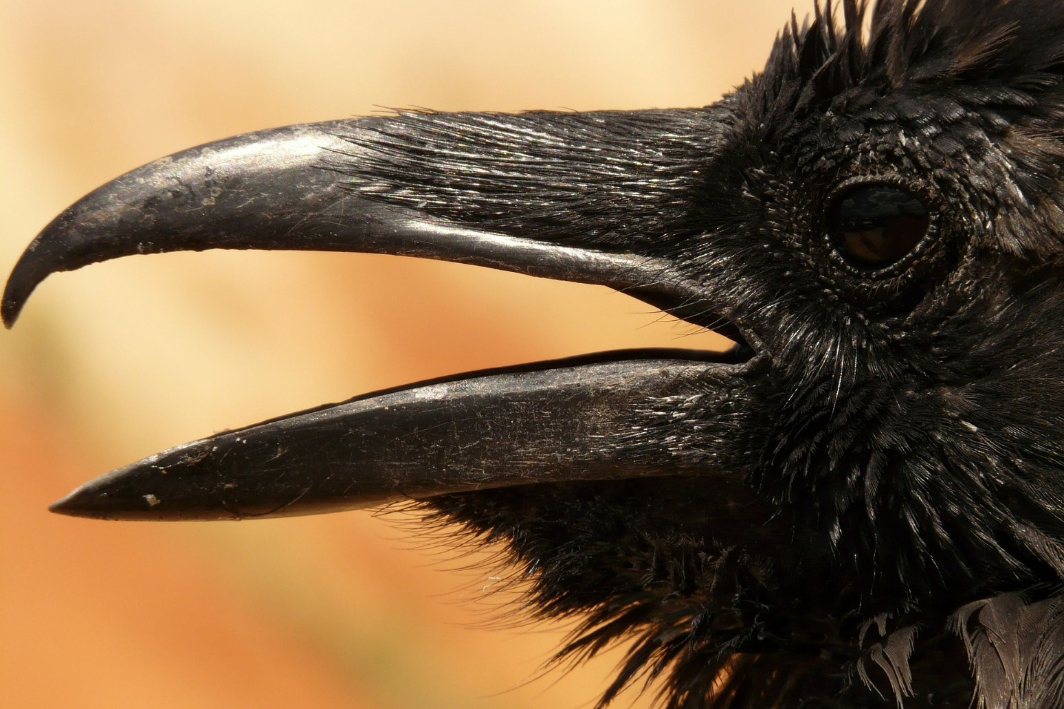 Raven chicks in the Tower ward off prophecy of doom for Brexit Britain